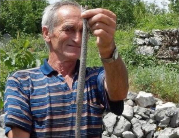 zmije