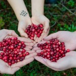cranberries-2810138_1280