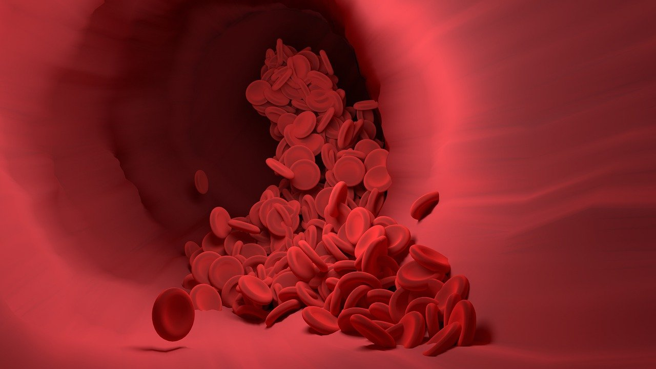 red-blood-cell-4256710_1280