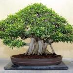 biljka vazduh