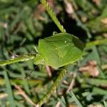 bug-1500758_1280