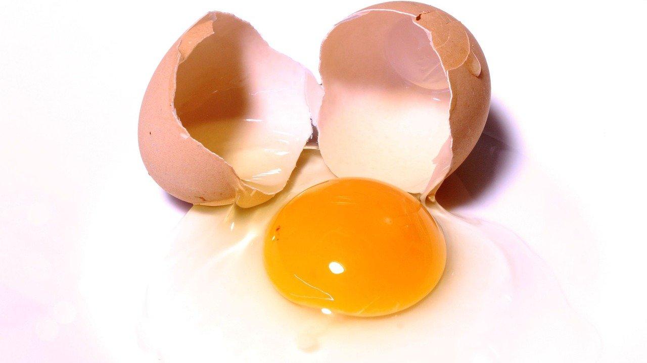 egg-2147169_1280