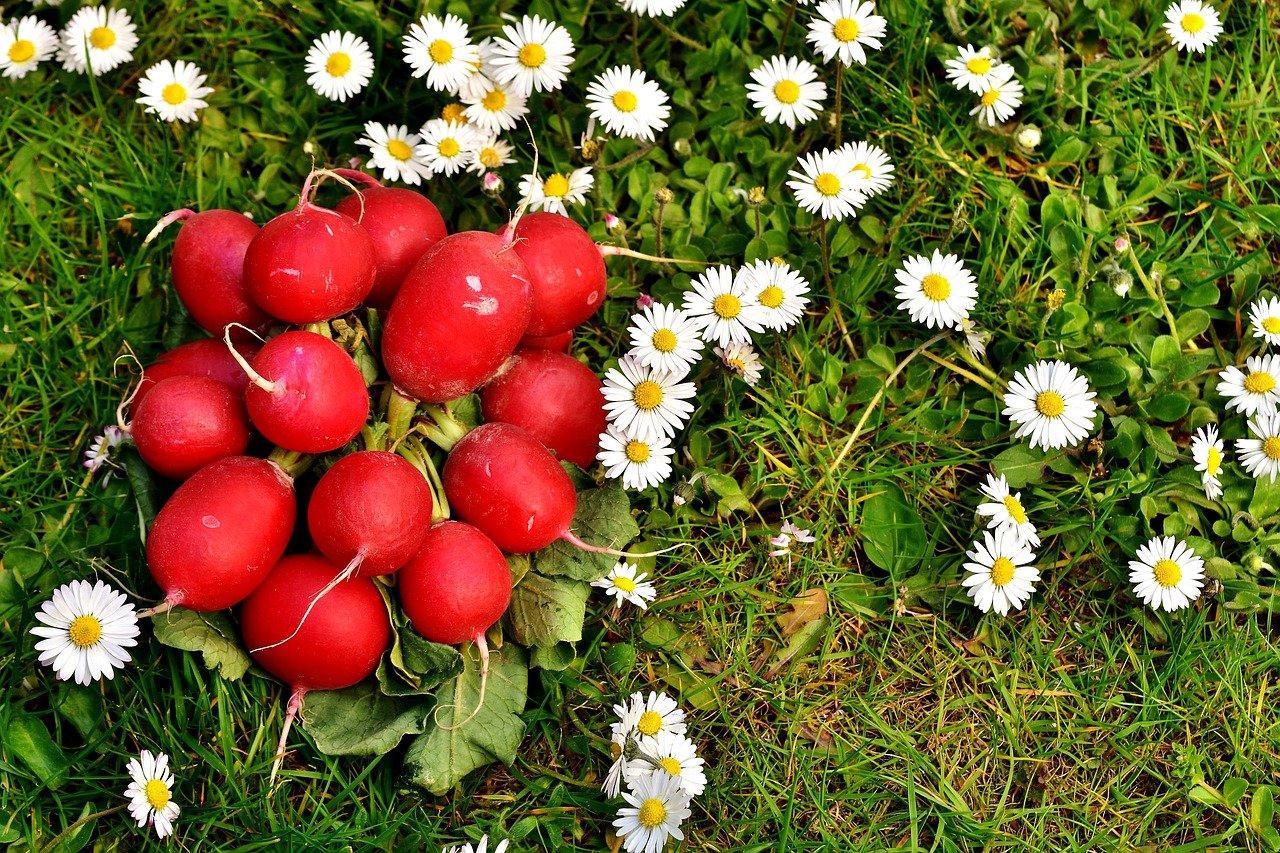 VJEROVATNO VAM NISU REKLI ZA SVA NJENA LJEKOVITA SVOJSTVA: Ova namirnica obnavlja štitnu žlijezdu, žuč i jetru