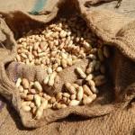 peanut-210435_1280